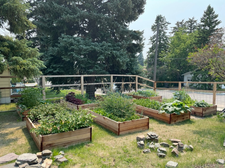 Eight cedar raised beds overflowing with vegetables. Some rocks in the foreground.